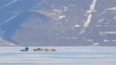 Arctic sled dogs pulling a man on a qamutik across sea-ice near Arctic Bay, - stock footage