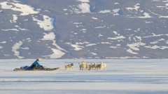 Arctic sled dogs towing a man on a qamutik across sea-ice. Stock Footage