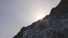 Flock of birds flying over an Arctic cliffside. Stock Footage