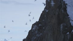Flock of seagulls flying around an Arctic cliffside. Stock Footage