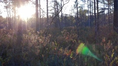Sun setting at swamp with insects flying Stock Footage