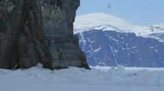 Seagulls flying around the face of an Arctic cliffside. Stock Footage