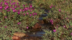 Stream filled with red rocks flowing through a Nunavut landscape. Stock Footage