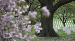 ARLINGTON CEMETARY AND BLOSSOMS - stock footage