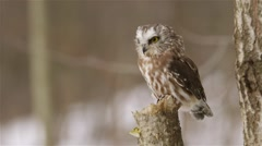 A small owl perched on a stump in the forest. Stock Footage