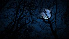 Moving Through Scary Woods Looking Up At Full Moon Stock Footage