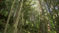 British Columbian rainforest and hiking path. Stock Footage