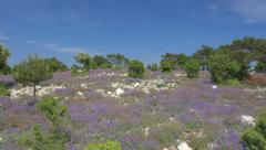 Aerial - Flyover hill with purple flowering bushes revealing the seascape - stock footage