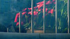Cat walks past flowers (impatiens) reflected in swimming pool Stock Footage