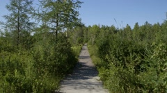 Boardwalk stretching through the wet portions of Alfred Bog. - stock footage