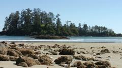 Beach landscape on Coral Island, British Columbia. (Tilt up) Stock Footage