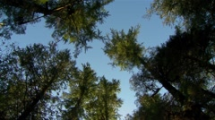 Sun kissed ferns in a British Columbian rain forest. - stock footage