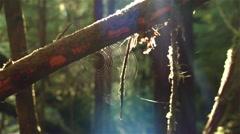 Wet spider web glistening in a British Columbian rain forest. - stock footage