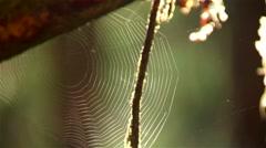 Wet spider web glistening in a British Columbian rain forest. Stock Footage