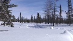 Dog Sled team running through a trail in the arctic. - stock footage