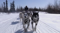 Dog Sled team running through a trail in the arctic. Stock Footage