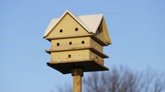 Group of finches sit in a birdhouse. - stock footage