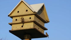 Group of finches in a birdhouse. Stock Footage