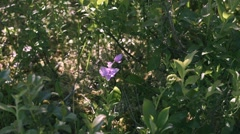 Grass pink orchid among other wetland flora in Alfred Bog. - stock footage