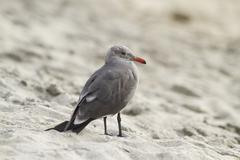 Sea Gull On Beach - stock photo