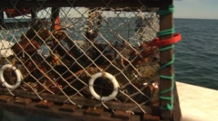 A bunch of lobsters in a trap fresh from the ocean. Stock Footage