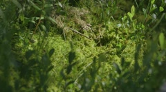 Lush plant life in the Alfred Bog. Stock Footage