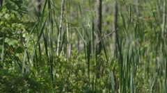 Marsh grass and other plant life in Alfred Bog. Stock Footage