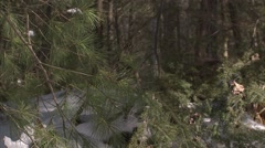 A porcupine wandering winter woodland. - stock footage