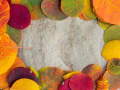 Framed colorful autumn leaves background - stock photo