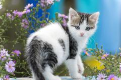 Motley kitten standing on  background of flowers Stock Photos