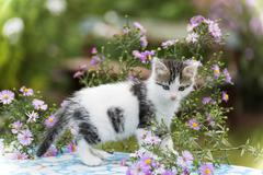 Motley kitten standing on  background of flowers - stock photo