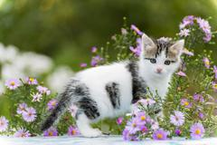 Motley kitten standing on  background of flowers - stock photo