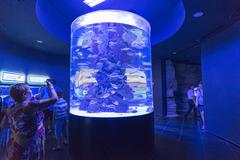 Antalya, Turkey-1 September 2014 People in the Antalya aquarium. The aquarium - stock photo