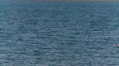 Sailboat in the Ottawa River. Stock Footage