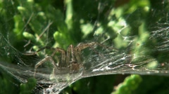 A spider sitting in the middle of it web. - stock footage