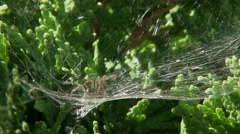A spider sitting in the middle of it web. Stock Footage