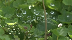 Water droplets upon a spider web. Stock Footage
