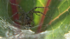 A spider sitting in it web. Stock Footage