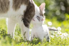 The cat is playing with a kitten on  green grass Stock Photos