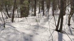 Animal tracks in the snowy forest floor. (Tilt) (Pan) Stock Footage