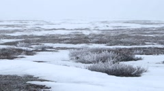 Arctic plains and tundra. (Pan) Stock Footage