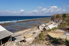 Plantations of seaweed on beach in Bali, Nusa Penida Stock Photos