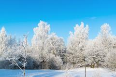 Beautiful winter forest on sunny day Stock Photos