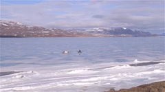 A qamutik being towed on sea ice by a snowmobile in Arctic Bay, Nunavut. Stock Footage