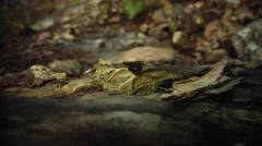 Close up of a rotting log on the forest floor. - stock footage