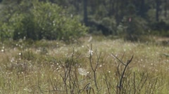 A bunch of spider webs in a Quebec field. Stock Footage