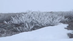 Snow tipped bush in the Arctic tundra. - stock footage