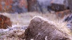 Snow falling on grass in Arctic Bay, Nunavut. Stock Footage