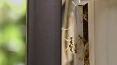 Wasps come and go from nest inside of a wooden container. Stock Footage