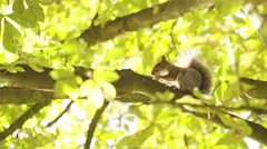 4K Camera watches a squirrel nibble a nut, shot on Red Epic Dragon Stock Footage